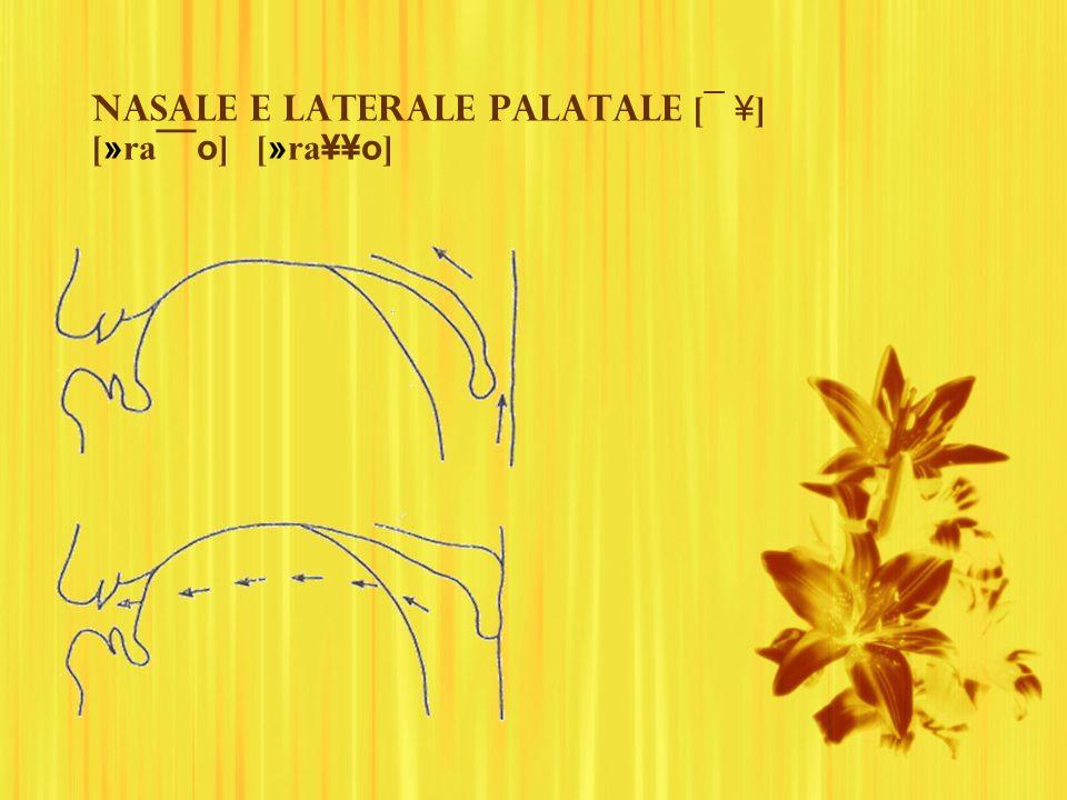 Nasale e laterale palatale [¯ ¥] [»ra¯¯o] [»ra¥¥o]